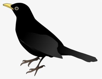 Black Bird PNG Images, Transparent Black Bird Image Download
