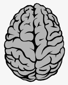 brain clipart png images transparent brain clipart image download pngitem brain clipart png images transparent