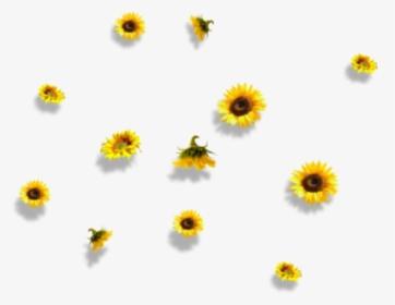 Aesthetic Sunflower Png Image Aesthetic Sunflower Transparent Background Png Download Transparent Png Image Pngitem