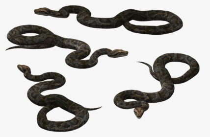 Snake, Brown, Yellow, Reptile, Slithering, Curled - Clip Art Of A Snake, HD  Png Download - kindpng