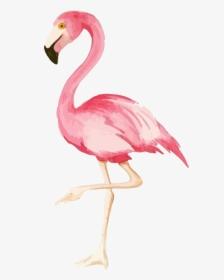 Tumblr Watercolor Aquarelle Flamingo Freetoedit Iphone