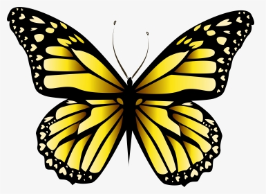 Yellow Butterfly Png Images Transparent Yellow Butterfly Image Download Pngitem