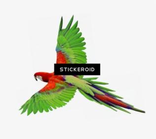 Parrot Fly Bird Gif