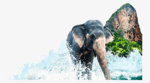 Kerala Elephant Png Images Transparent Kerala Elephant Image Download Pngitem Elephant 2312 views image license: kerala elephant png images transparent