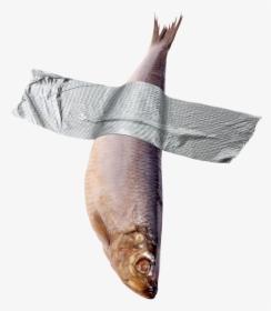 Fish Png Dead Fish No Background Transparent Png Transparent Png Image Pngitem