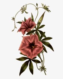 10+ Best Orange Flower Art For Sale images   flower art, orange flowers,  art for sale