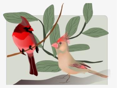 Transparent Christmas Cardinal Clipart Bird Hd Png Download Transparent Png Image Pngitem