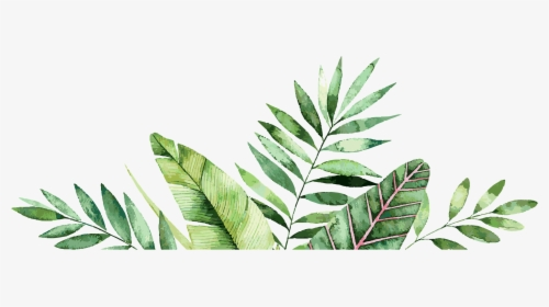 Palm Leaves Graphic Royalty Free Botanical Border Hd Png Download Transparent Png Image Pngitem Try to search more transparent images related to tropical leaves png |. palm leaves graphic royalty free
