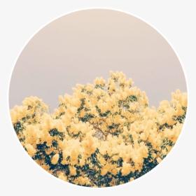 Yellow Flowers Yellowflowers Aesthetic Background Pastel Yellow Aesthetic Backgrounds Hd Png Download Transparent Png Image Pngitem