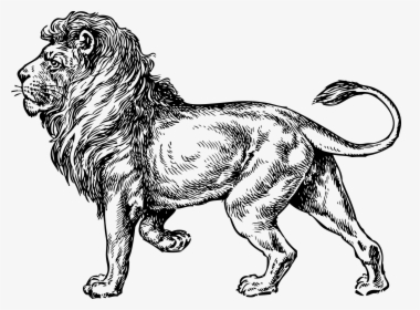 Lion Painting Airbrush Art Drawing Airbrush Lion Art Hd Png Download Transparent Png Image Pngitem Download 1046 lion cliparts for free. lion painting airbrush art drawing