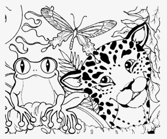 Rainforest Animals and Plants Coloring Page | Rainforest Alliance | 280x336