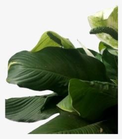 Leafs Leaf Green Greenleafs Frame Wallpaper Background Leaves Png Transparent Png Transparent Png Image Pngitem