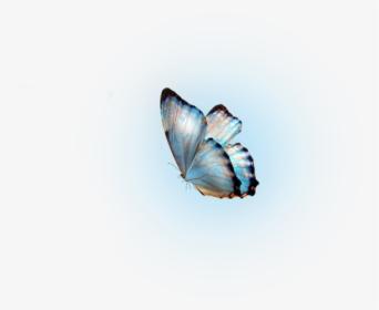 Glow Butterfly Png Molduras Transparent Png Transparent Png Image Pngitem