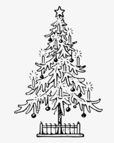 Trees Cartoon clipart - Tree, Drawing, Birch, transparent clip art